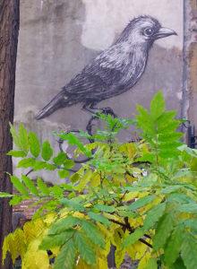 fall-bird